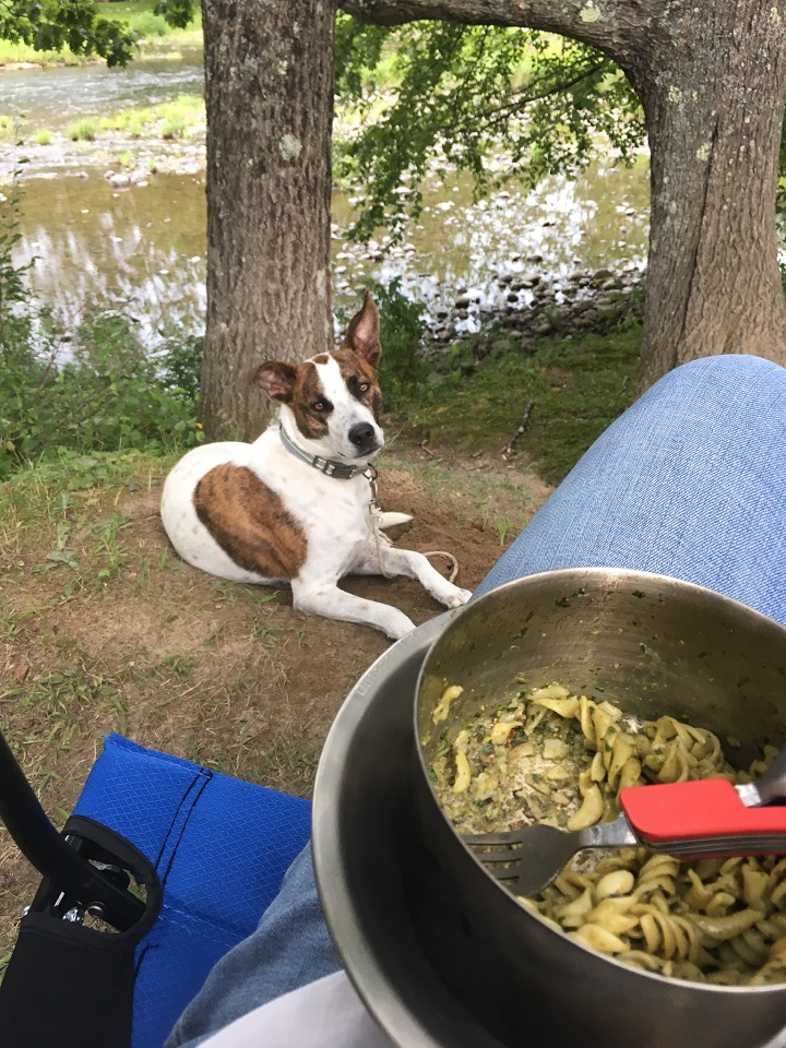 When the campground wood is too green, my Kelly Kettle steals the scene! (And cooks up a mighty fine pesto meal)