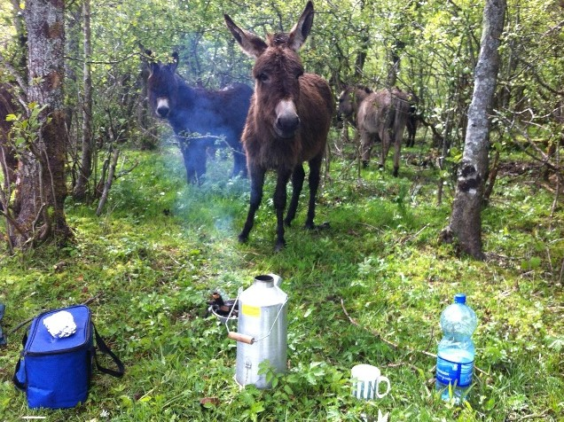 Even a Donkey can use a Kelly Kettle!  :-)